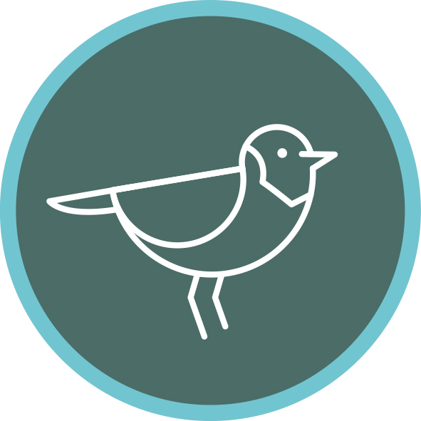 Hooded plover icon